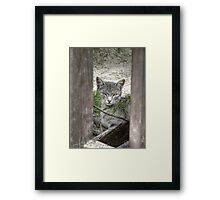 Ferrel Framed Print