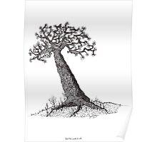 Bristle Cone Pine Tree Poster