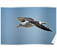 Seagull in the Sky Poster