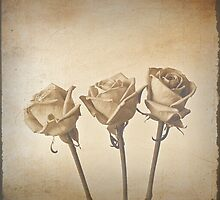 Roses by Christopher  Rees