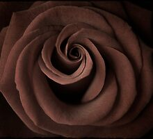 Rose by Christopher  Rees