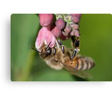 Hanging Honey Bee Canvas Print