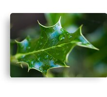 Mahonia Leaf with rain drops Canvas Print