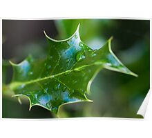 Mahonia Leaf with rain drops Poster