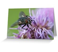 Calliphoridae, Blow-fly on thistle Greeting Card