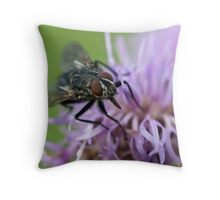 Calliphoridae, Blow-fly on thistle Throw Pillow