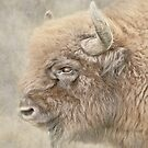 Bison by peaky40