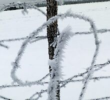 Barbed Wire and Ice by Eric  Neitzel