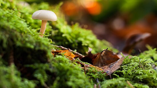 Unidentified Sprouting Mushroom??? by Leon Ritchie
