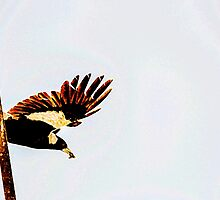 Magpie over the bar by JoBling