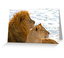 Lions in the Snow Greeting Card