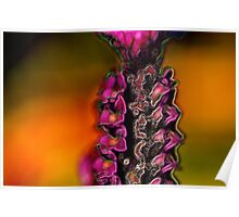 Fancy French Lavender Poster