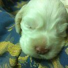Newborn Duncan by maggiepoohbear