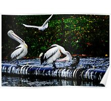 Feathered friends in Birdland Poster