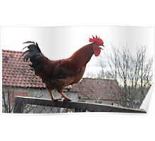 Rooster on Stockade Poster