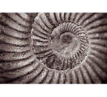 Archimedean spiral Photographic Print