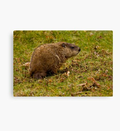 Rodent In The Rain Canvas Print