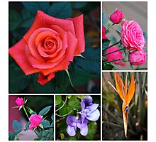 FLORAL COLLAGE -MIXED FLOWERS Photographic Print