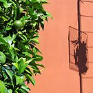 Oranges are green, but the wall is ……… by Ian Ker