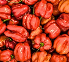 Red Habanero Peppers by njordphoto