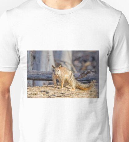 Dryandra's Numbat  T-Shirt