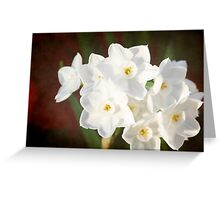 Snow White Daffodils Greeting Card