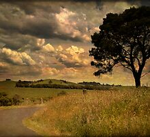 quiet country road by Clare Colins