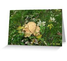 Wild White Mushrooms Greeting Card