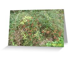 The bowing red berries Greeting Card