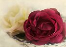 antique roses by Teresa Pople