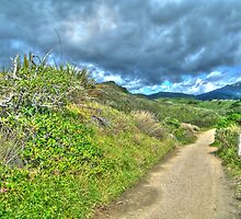 Walking Track HDR by chaisetaylor