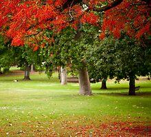 Treasury Gardens by Craig Baron