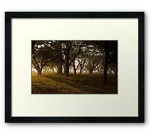 Morning woods Framed Print