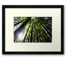 Light Streaming Through Redwoods Framed Print
