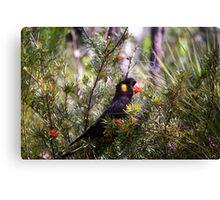 Yellow-tailed Black Cockatoo Canvas Print