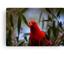 King Parrot Canvas Print
