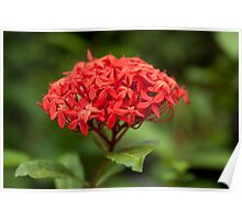 Summer red flower on background of green leaves Poster