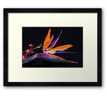 Tropical pair Framed Print