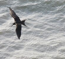 Frigate Bird Sailing above the Sea - Fregata Volando arriba del Mar by PtoVallartaMex
