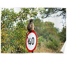 PLEASE TAKE NOTE OF THE SPEED ZONE! - THE CHACHMA BABOON - Papio ursinus Poster
