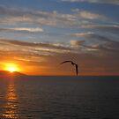 Sunset with Bird - Puesta del Sol con Pajaro by PtoVallartaMex