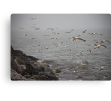 A flock of Seagulls feeding Canvas Print