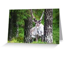 Lappland . Sweden . by Brown Sugar . My remembers . Greeting Card