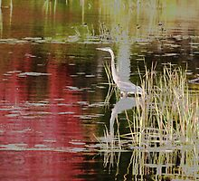 Blue Heron Autumn Muskoka by Carolyn  Reinhart