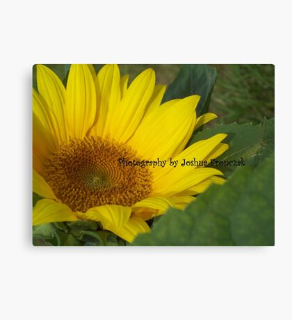 favorite sunflower. Photography by Joshua Fronczak Canvas Print