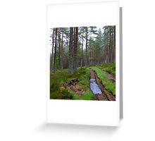 Altyre Woods, near Forres, Scotland Greeting Card