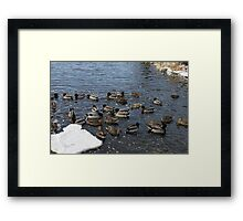 Winter ducks. Joliet, illinois. Photography Joshua Fronczak Framed Print