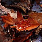 Still Autumn ! by Elfriede Fulda