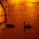 Artic Swans on the Passaic River at Sunset by Jane Neill-Hancock