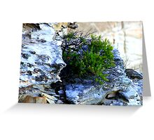 north head manly - little seed grew Greeting Card